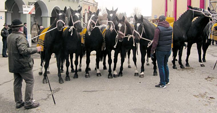Pferdemarkt in Bad Schussenried